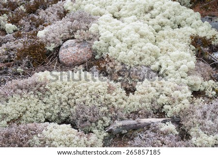 Background image of lichen and moss - stock photo