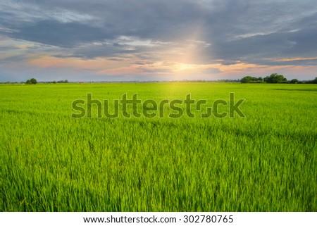 Background image of lush grass field under sunset - stock photo