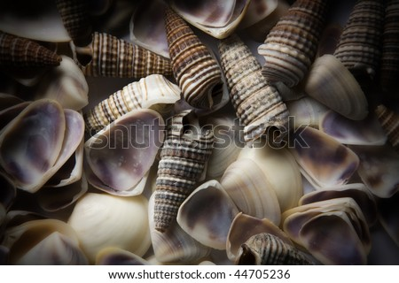 background image of many small sea shell