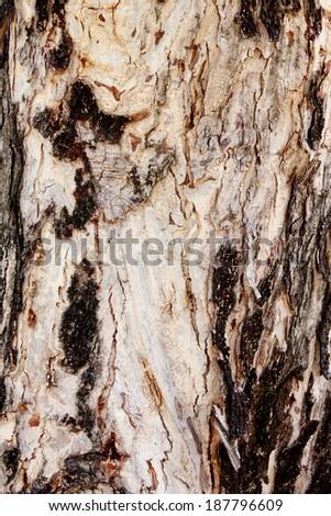 Background image old tree bark - stock photo