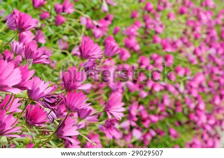 Background image with pink flowers - stock photo