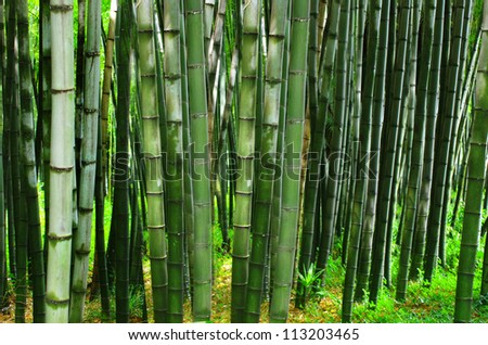 Background in bamboo - stock photo