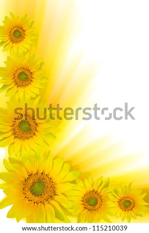 Background in the form of a frame from yellow flowers - stock photo