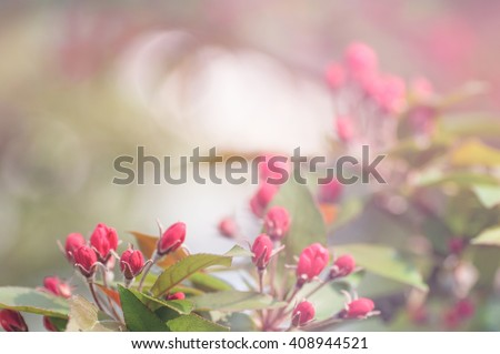 background is a red flower Bud on the tree - stock photo