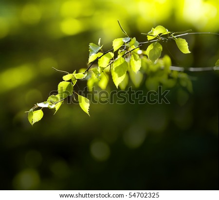 Background leaves green - stock photo