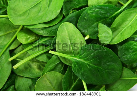 background leaves of  spinach. fresh greens - stock photo