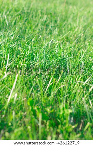 background lot of beautiful green grass