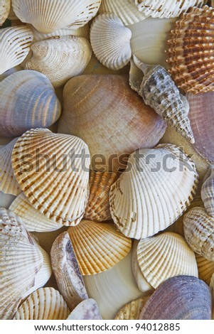 Background - lots of different shells - stock photo
