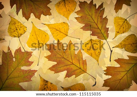 Background made of autumn brown and orange leaves - stock photo