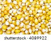 background made of corn seeds - stock photo