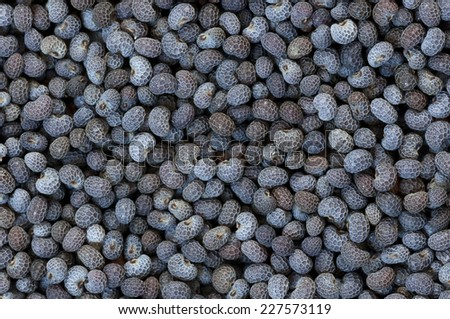 Background made of dried poppy seeds close up - stock photo