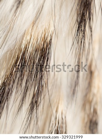 background made of natural fur