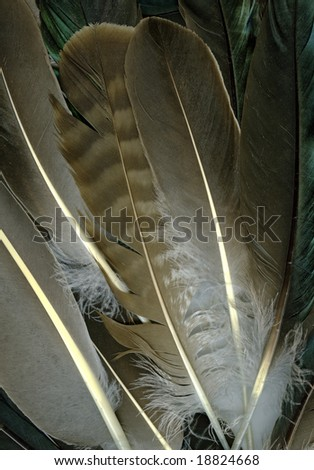 Background made of raven feathers - stock photo