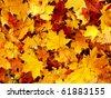background maple leaf - stock photo