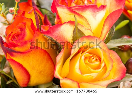 Background of a bouquet of beautiful fresh vivid orange roses tinged with red for celebrating Valentines, an anniversary, birthday or Mothers Day - stock photo