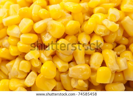 Background of a bunch or fresh grains of sweet corn - stock photo