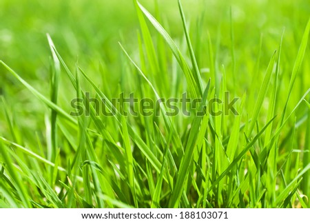 Background of a green grass (selective focus)