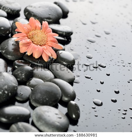 background of a spa with stones, and gerber flower - stock photo