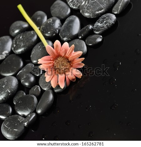 Background of a spa with stones, and gerber flower. Water drops. - stock photo