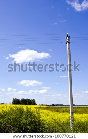 background of agricultural rapeseed fields and concrete electricity pole on background of blue sky. - stock photo