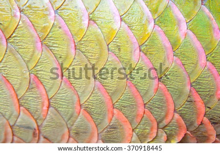Background of arapaima fish scales