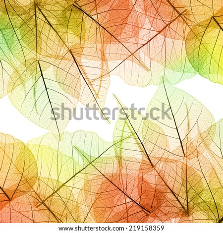 Background of Autumn color Leaves - natural texture - stock photo