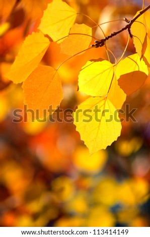 Background of autumn leaves. - stock photo