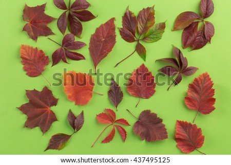 Background of autumn leaves. Leaves are on the green background. - stock photo