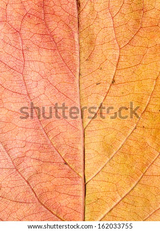 Background of autumn leaves. macro