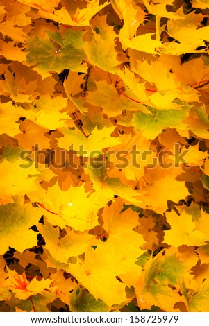 Background of autumn yellow leaves - stock photo