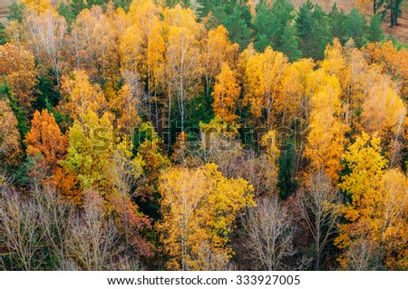 background of autumnal trees texture pattern - stock photo