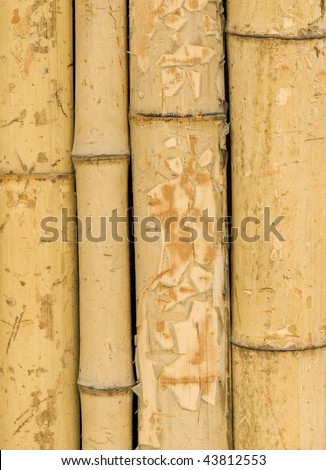 Background of bamboo stalks