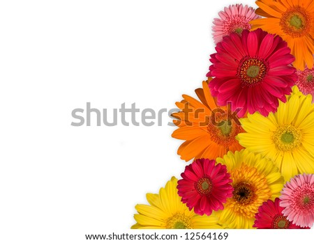 Background of beautiful flowers - stock photo