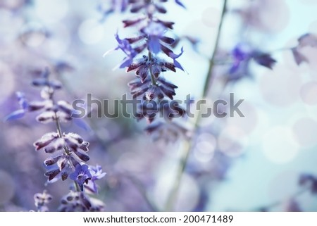 Background of beautiful lavender color flower - stock photo