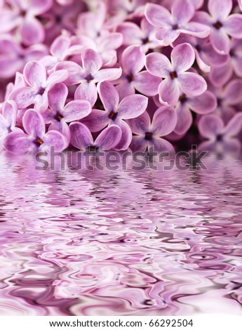 background of beautiful lilac above the water - stock photo
