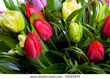 Background of beautiful tulips - stock photo