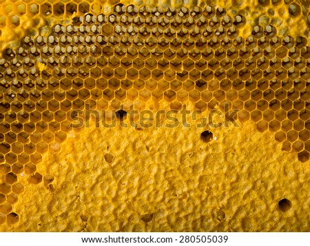 background of  beehive - stock photo