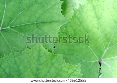 Background of bright green foliage