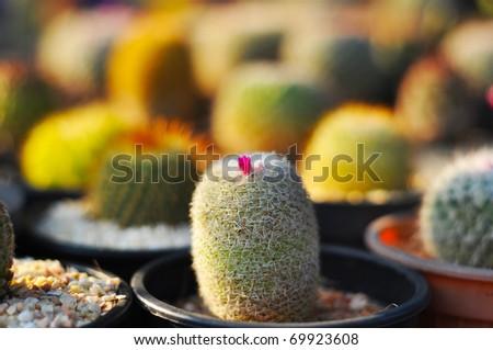 Background of Cactus - stock photo