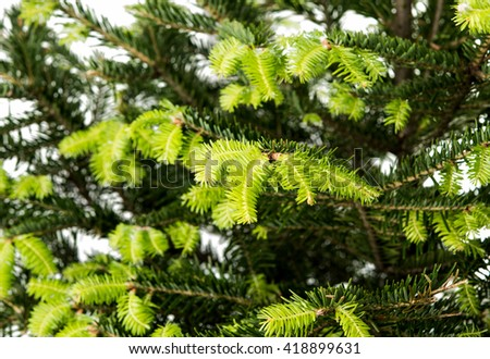 Background of Christmas tree branches - stock photo