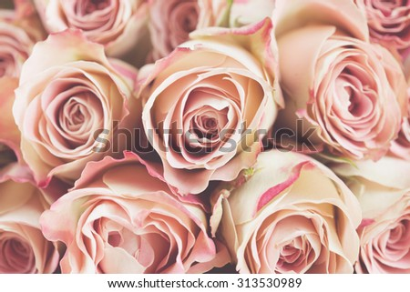 Background of cream and pink roses - stock photo