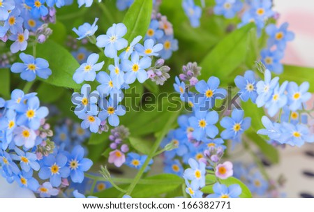 background of delicate flowers forget-me-not, selective focus - stock photo