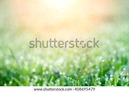 background of dew drops on bright green grass with sun beam. Bright natural bokeh. Soft focus. Abstract creative background . small depth of field