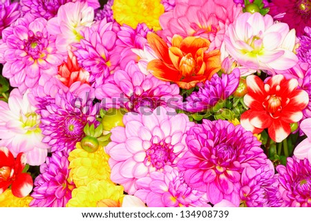 background of different color Flowers - stock photo