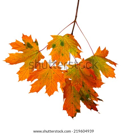 Background of falling autumn leaves - stock photo