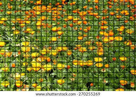 Background of flowers calendula officinalis using filter - stock photo