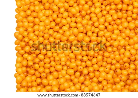 Background of fresh berries of sea buckthorn, isolated on the left, white background