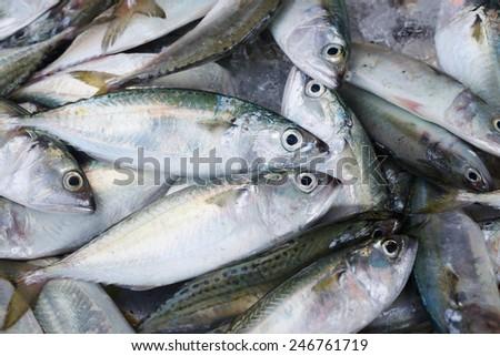 Background of fresh fish on the Asian fish market - stock photo