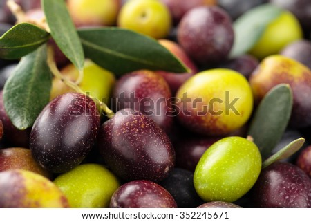 Background of fresh green and  black olives with leaves. - stock photo