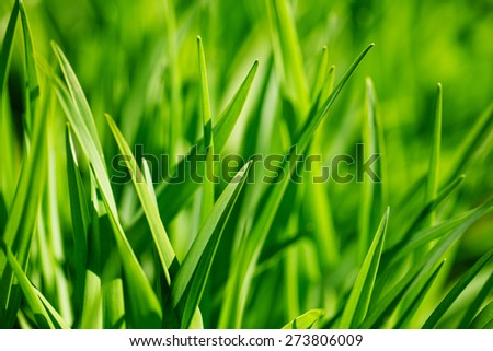 Background of fresh green grass in sunshine - stock photo
